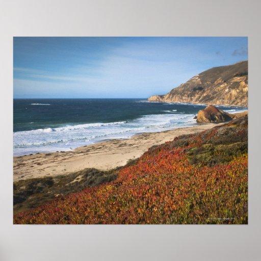Los E.E.U.U., California, Sur grande, plantas roja Poster