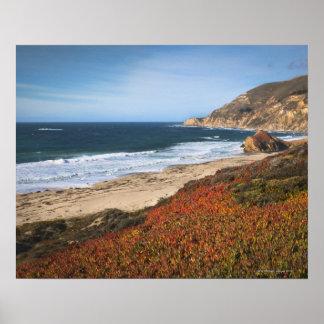 Los E.E.U.U., California, Sur grande, plantas roja Póster