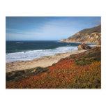 Los E.E.U.U., California, Sur grande, plantas roja Tarjetas Postales