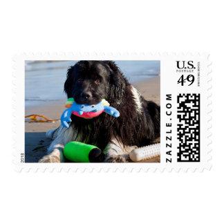 Los E.E.U.U., California. Terranova con el juguete Timbre Postal