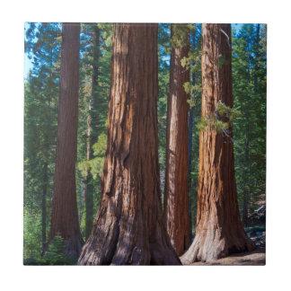 Los E.E.U.U., California. Troncos de árbol de la Azulejo Cuadrado Pequeño