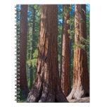Los E.E.U.U., California. Troncos de árbol de la Spiral Notebooks
