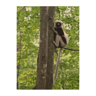 Los E E U U Carolina del Norte duque Lemur Impresiones En Madera
