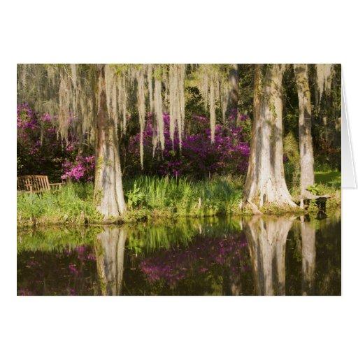 Los E.E.U.U., Carolina del Sur, Charleston. Árbole Felicitación