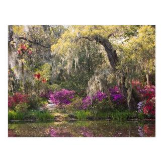 Los E.E.U.U., Carolina del Sur, Charleston. Árbole Postales