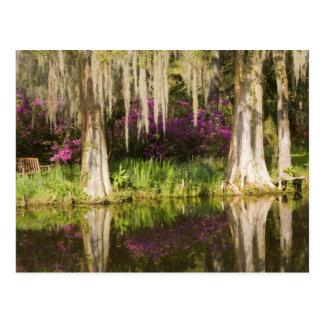 Los E.E.U.U., Carolina del Sur, Charleston. Árbole Tarjeta Postal