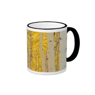 Los E.E.U.U., Colorado. Álamos tembloses en el Tazas De Café