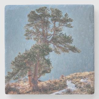 Los E.E.U.U., Colorado, árbol en el parque de Posavasos De Piedra