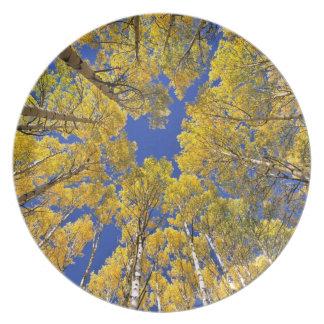 Los E.E.U.U., Colorado, área de Aspen. Bosque de A Plato