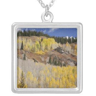 Los E.E.U.U., Colorado, bosque del Estado de Colgante Cuadrado