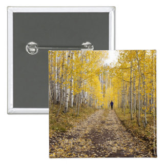 Los E.E.U.U., Colorado, bosque del Estado de Gunni Pin Cuadrado