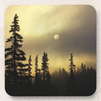 Los E.E.U.U., Colorado, bosque nacional de San Isa Posavasos