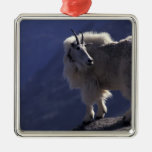 Los E.E.U.U., Colorado, cabra de montaña (Oreamnos Ornamento Para Reyes Magos