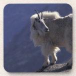 Los E.E.U.U., Colorado, cabra de montaña (Oreamnos Posavasos De Bebida