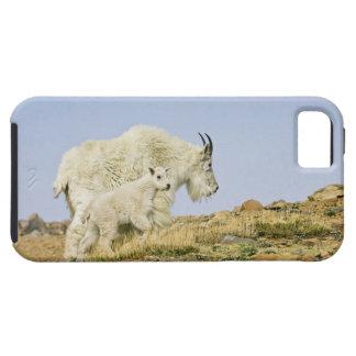 Los E.E.U.U., Colorado, montañas rocosas, soporte Funda Para iPhone SE/5/5s