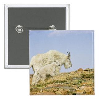 Los E.E.U.U., Colorado, montañas rocosas, soporte  Pin Cuadrada 5 Cm