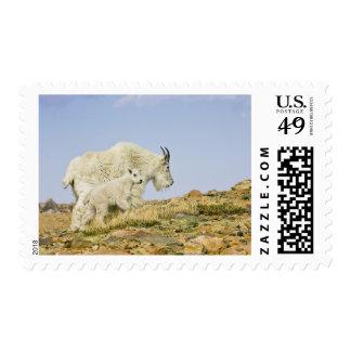 Los E.E.U.U., Colorado, montañas rocosas, soporte Sello