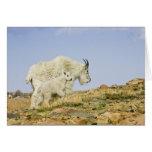 Los E.E.U.U., Colorado, montañas rocosas, soporte  Felicitaciones