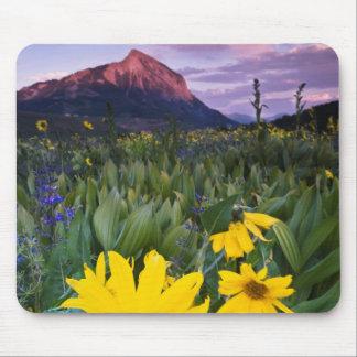 Los E.E.U.U., Colorado, Mt. Crested la mota Mousepad