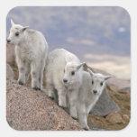 Los E.E.U.U., Colorado, Mt. Evans. Cabra de Calcomanía Cuadrada Personalizada