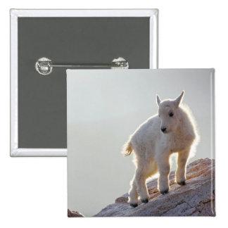 Los E.E.U.U., Colorado, Mt. Evans. Primer de jóven Pin Cuadrada 5 Cm