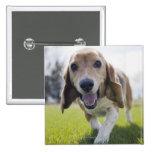 Los E.E.U.U., Colorado, perro curioso que camina h Pin