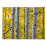 Los E.E.U.U., Colorado, soporte de Aspen del otoño Tarjetas Postales