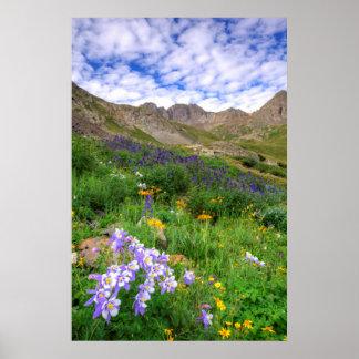 Los E.E.U.U., Colorado. Wildflowers en lavabo Póster