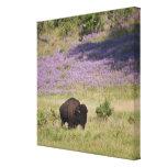 Los E.E.U.U., Dakota del Sur, bisonte americano Impresión En Lona Estirada