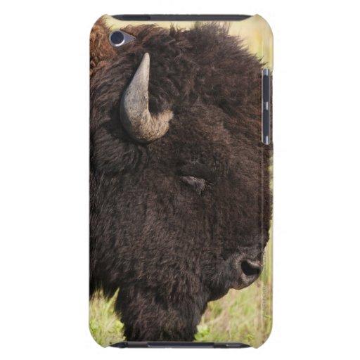 Los E.E.U.U., Dakota del Sur, bisonte americano iPod Case-Mate Carcasas