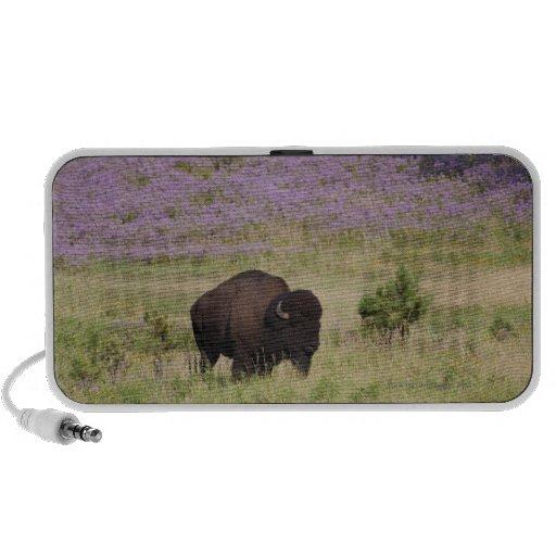 Los E.E.U.U., Dakota del Sur, bisonte americano Laptop Altavoces