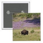Los E.E.U.U., Dakota del Sur, bisonte americano Pin Cuadrado
