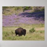 Los E.E.U.U., Dakota del Sur, bisonte americano Póster