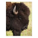 Los E.E.U.U., Dakota del Sur, bisonte americano Tarjetas Postales