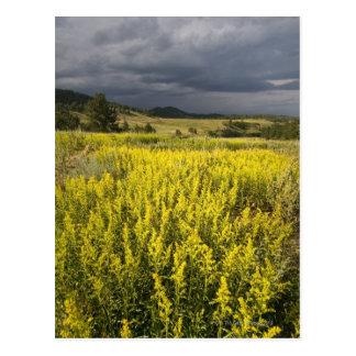 Los E.E.U.U., Dakota del Sur, flores y tormenta Postal