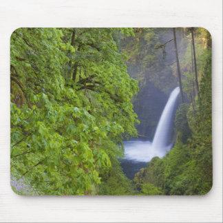 Los E E U U Eagle Creek garganta de Columbia O Alfombrillas De Raton