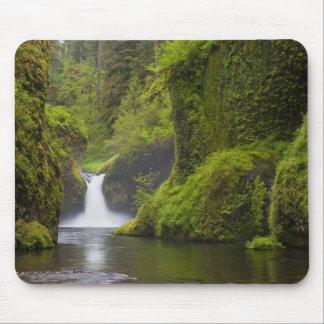 Los E E U U Eagle Creek garganta de Columbia O Tapetes De Ratón