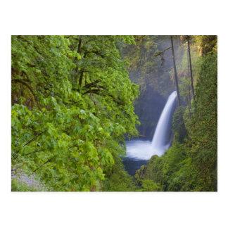 Los E.E.U.U., Eagle Creek, garganta de Columbia, O Postales