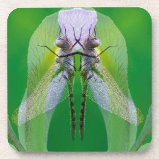 Los E.E.U.U., Georgia. Montaje de la libélula Posavaso