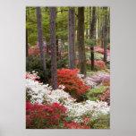 Los E.E.U.U., Georgia, montaña del pino. Un bosque Posters
