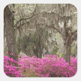 Los E.E.U.U., Georgia, sabana, primavera en Pegatina Cuadrada