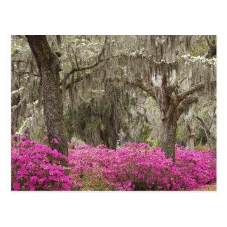 Los E.E.U.U., Georgia, sabana, primavera en Tarjetas Postales