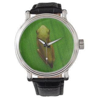 Los E.E.U.U., Georgia, sabana, rana minúscula en Relojes De Pulsera