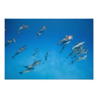 Los E E U U Hawaii isla grande vista subacuáti Impresiones Fotográficas