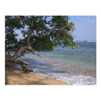 Los E.E.U.U., Hawaii, Kauai, varan escénico. RF) Postal