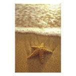 Los E.E.U.U., Hawaii, Maui, Maui, Kihei, estrella  Fotografia