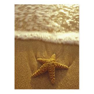 Los E.E.U.U., Hawaii, Maui, Maui, Kihei, estrella Postales