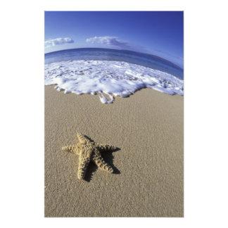 Los E.E.U.U., Hawaii, Maui, playa de Makena, estre Cojinete