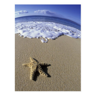 Los E.E.U.U., Hawaii, Maui, playa de Makena, estre Postal