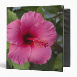 "Los E.E.U.U., Hawaii, Oahu. El hibisco es los 2 Carpeta 1 1/2"""